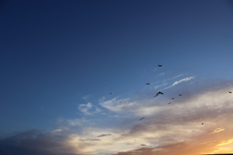 birds-at-sunset-in-dc_27699397924_o