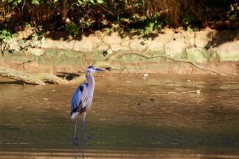 morning-paddle-on-the-anacostia-river_28838286635_o