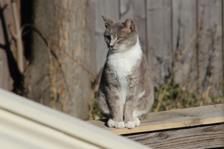 alley-cat_16146646451_o