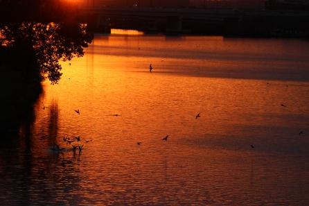 anacostia-river-wdc_15150962543_o