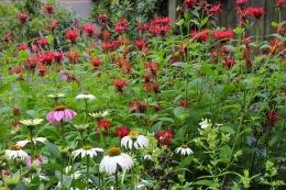 back-garden-se-dc_19003558635_o