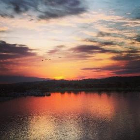 birds-coming-down-the-anacostia-river_17324770531_o