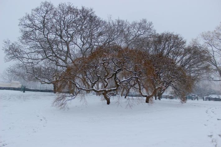 blizzard-2016_24199010899_o