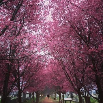blooming_16831382938_o
