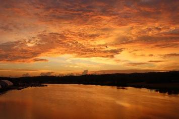 egret-coming-down-the-anacostia-at-sunrise_21360146121_o