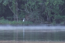 egret-fog-anacostia-river_20877002121_o