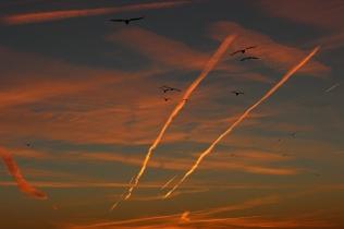 sun-setting-in-dc_15918191152_o