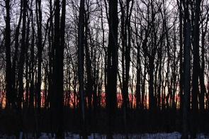 sunset-through-trees_16116882650_o