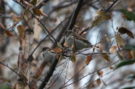thanksgiving-critters-in-washington-dc_15703880778_o