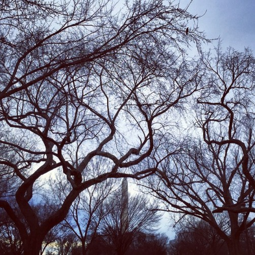 trees-monument_16618438698_o
